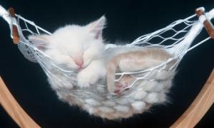 kittensleep